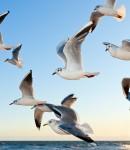 gulls-370012_1920